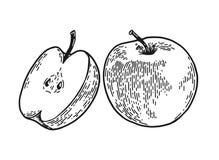 Apple inristade skissar vektor illustrationer