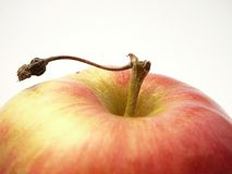 Apple. Stock Photo