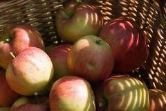 Apple, James Grieve Royalty Free Stock Photos