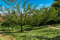 Apple jardina no monte de Petrin fotografia de stock royalty free