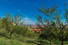 Apple jardina no monte de Petrin, Praga, República Checa Imagem de Stock Royalty Free