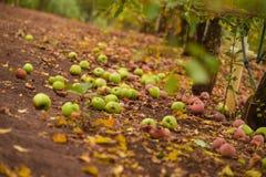 Apple kulle Arkivfoto