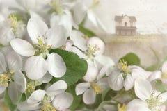 Apple kwitnie z domem w tle zdjęcie stock