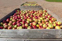 Apple-landbouwbedrijf Royalty-vrije Stock Foto's