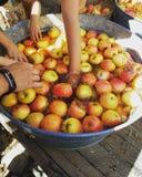 Apple-landbouwbedrijf stock afbeelding