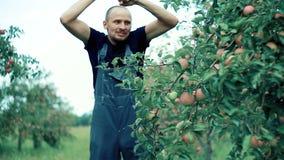 Apple-landbouwer het dansen stock footage