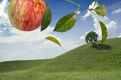 Apple landscap Stock Photos