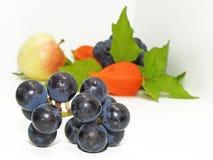 Apple, las uvas de la concordia y el physalis negros florecen Imágenes de archivo libres de regalías