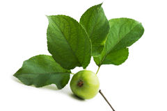 Apple and leaf Royalty Free Stock Photography