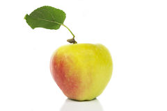 Apple leaf Royalty Free Stock Image