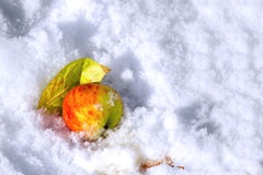 Apple and leaf under first snow. Red Apple lying in the snow with yellow leaves Royalty Free Stock Image