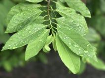 Apple leaf Stock Photos