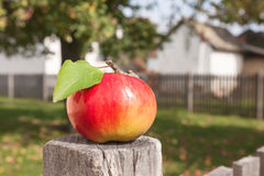 Apple with a leaf on a wooden fence Royalty Free Stock Photo
