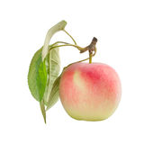 Apple with leaves Royalty Free Stock Photos