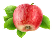 Apple with leaves Royalty Free Stock Images