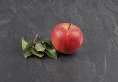 Apple with leaves on shale. Colorful and crisp image of apple with leaves on shale Royalty Free Stock Photos