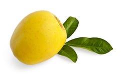 apple leaves yellow Стоковая Фотография