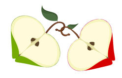Apple love. Two apple love vector illustration vector illustration