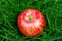 apple lying on green grass Stock Image