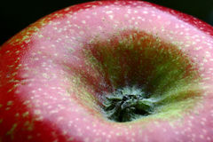 Apple macro. Detail of a bright red apple with focus on the flower and on the fruit's fine texture stock photography