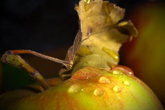 Apple macro shot Royalty Free Stock Image