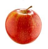 Apple - Malus domestica Lizenzfreie Stockfotografie