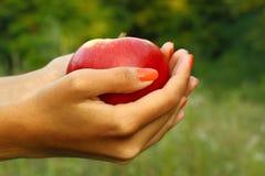 Apple in mani della donna Fotografia Stock