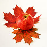 Apple  maple. Autumn still life of apples and maple Royalty Free Stock Photography