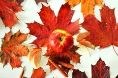 Apple  maple cinnamon. Autumn composition of maple and apple trees, cinnamon Stock Photos