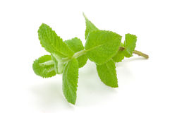 Apple mint Stock Image