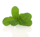 Apple Mint Herb Royalty Free Stock Photos