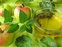 Apple mint jelly Stock Image