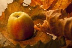 Apple mit Blättern Lizenzfreie Stockfotos