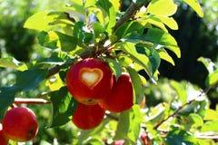 Apple mit einem Herzen auf einem Baum lizenzfreie stockbilder