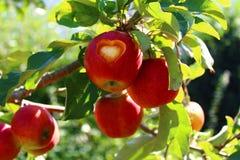 Apple mit einem Herzen auf einem Baum stockfotos