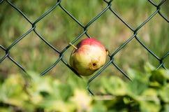 Apple mit einem Wormhole und einer Biene Lizenzfreie Stockfotografie