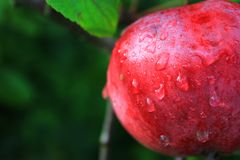 Apple mit Wassertropfen stockbild