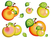 Apple,  model with  EPS file. Many apples,  model with  EPS file Stock Image