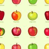 Apple modella con testo Immagine Stock Libera da Diritti