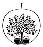 Apple moissonnent photos libres de droits