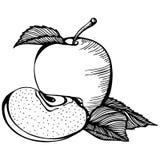 Apple monochrome drawing Stock Photos