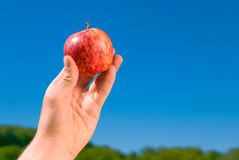Apple in my hand Royalty Free Stock Photo