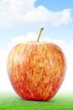 Apple na grama Fotos de Stock Royalty Free