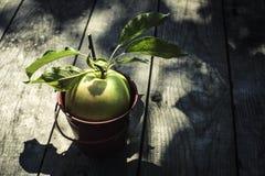 Apple na madeira Imagem de Stock Royalty Free