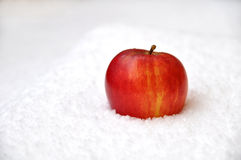 Apple na neve Fotografia de Stock