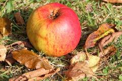 Apple na terra Fotografia de Stock