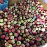 Apple neemt landbouwbedrijf op Royalty-vrije Stock Fotografie