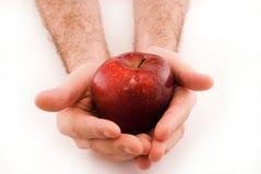 Apple nelle mani Immagini Stock Libere da Diritti