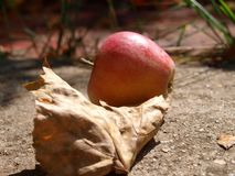 Apple next to a dry leaf. Autumn mood. Apple on concrete next to a dry leaf royalty free stock photography