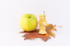 Apple. Nibbled apple and apple on a beautiful autumn leaf on a white background royalty free stock photography